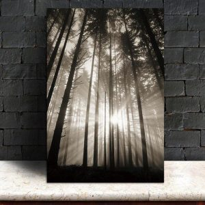 Canvas Wall Art - Sun Through Nordic Forest - 1