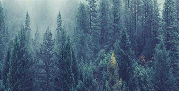 Single Canvas Nordic Forest Landscape - 4