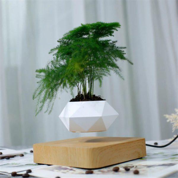 Levitating Pot Plant - 6